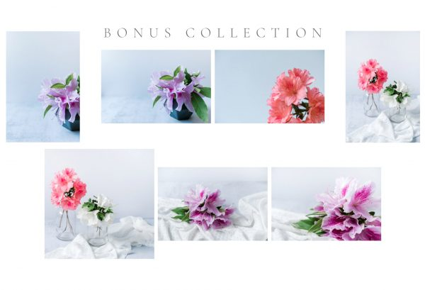 White Garden Azalea Stock Collection by Anna Wisjo Stock