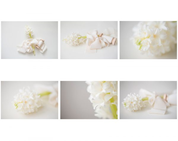 white hyacinth stock collection by Anna Wisjo Photography